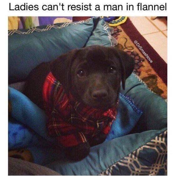 funny dog meme wearing a flannel