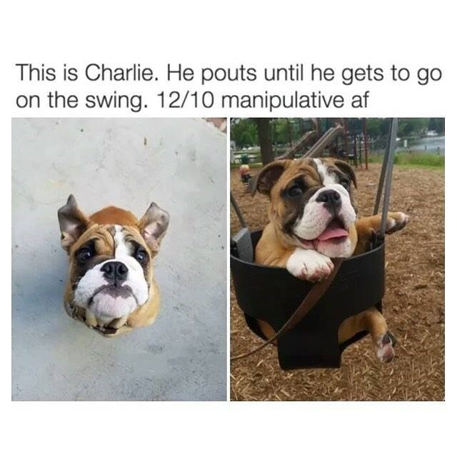 funny dog meme of a dog who pouts until he gets to go in a swing