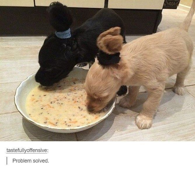 funny dogs eating while their fur is held in a hair-tie