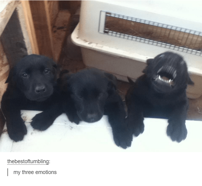 funny dog meme of three dogs with three different emotions