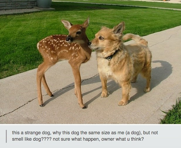 funny dog meme of a dog and a baby deer who are the same size