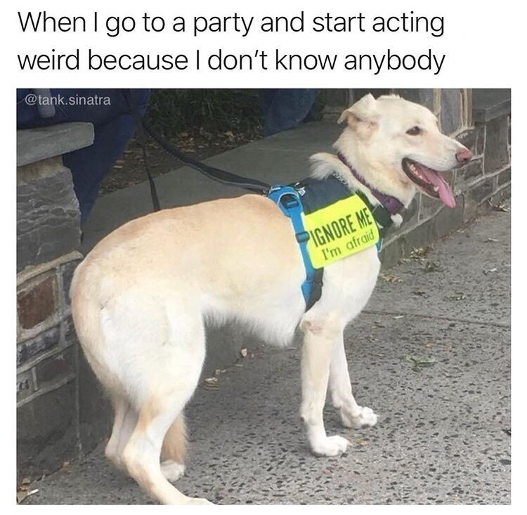 """Caption that reads, """"When I go to a party and start acting weird because I don't know anybody"""" above a pic of a dog with a sign on him that reads, """"Ignore me, I'm afraid"""""""