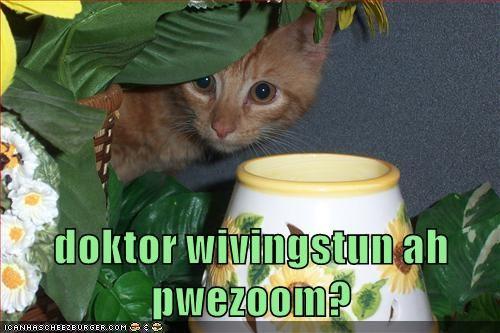 Doktor wivingstun ah pwezoom?