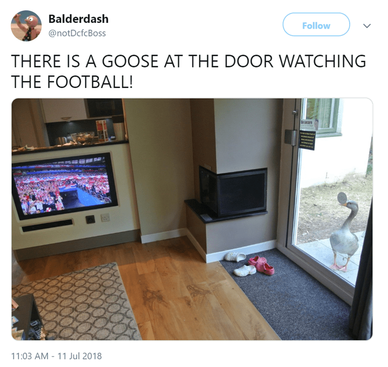 Property - Balderdash Follow @notDcfcBoss THERE IS A GOOSE AT THE DOOR WATCHING THE FOOTBALL! Be secure 11:03 AM 11 Jul 2018 Dming