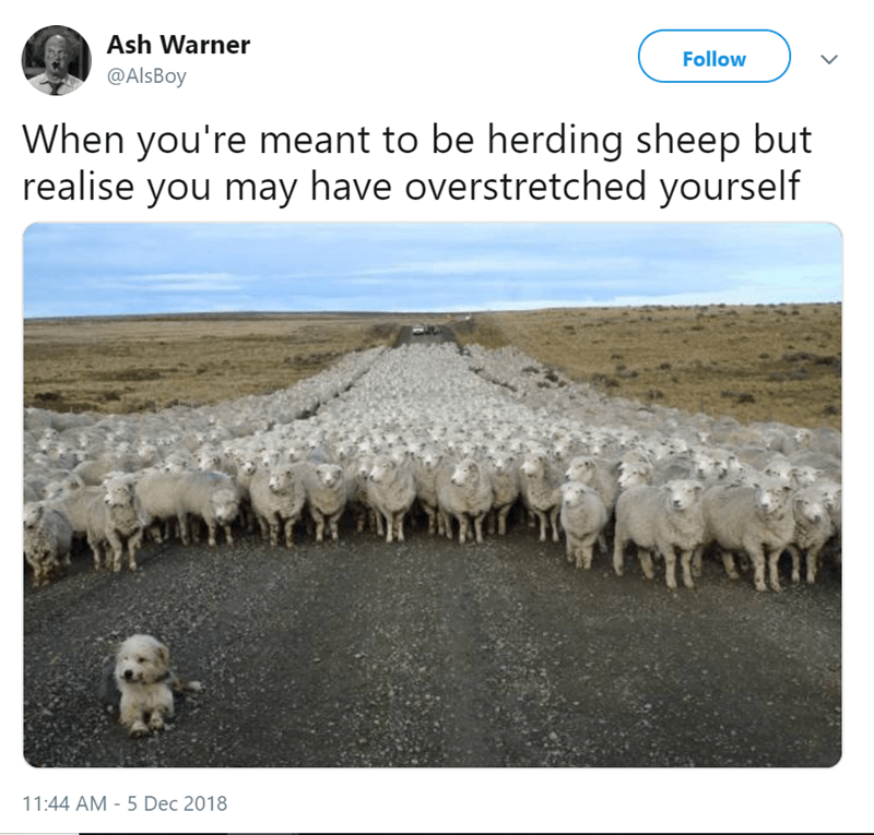 Herd - Ash Warner Follow @AlsBoy When you're meant to be herding sheep but realise you may have overstretched yourself 11:44 AM - 5 Dec 2018