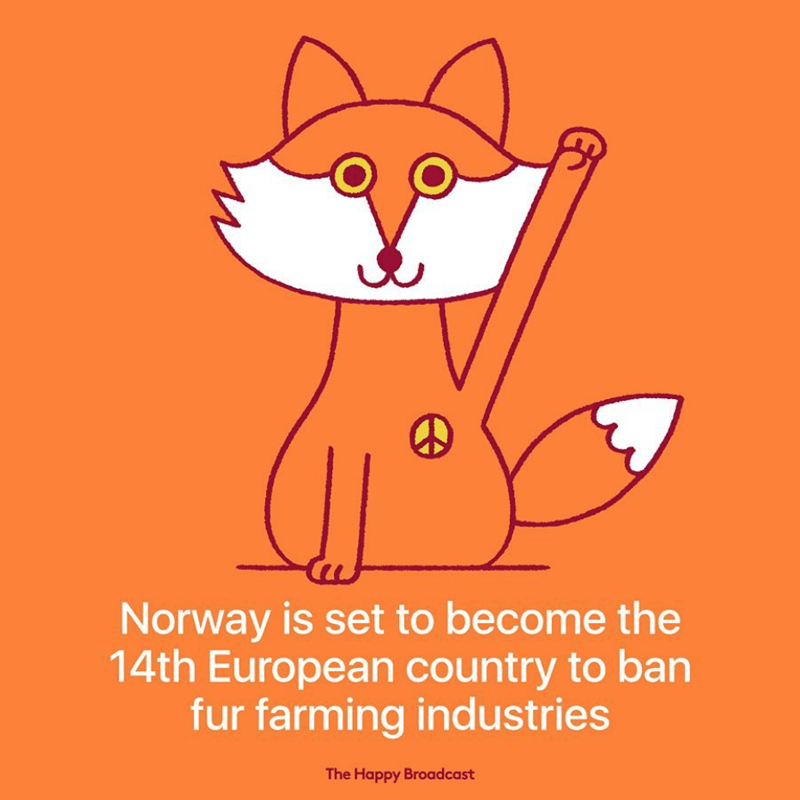 Cartoon - Norway is set to become the 14th European country to ban fur farming industries The Happy Broadcast