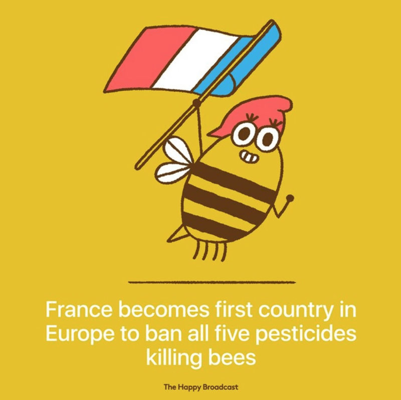 Yellow - France becomes first country in Europe to ban all five pesticides killing bees The Happy Broadcast