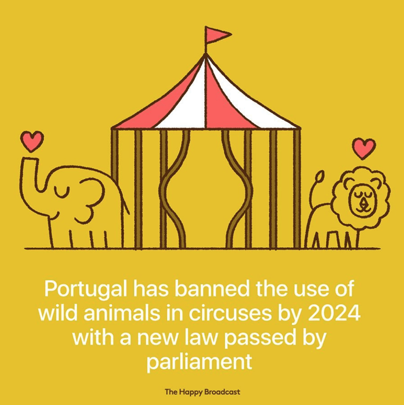 Yellow - AL ΙΛΛΛΙ Portugal has banned the use of wild animals in circuses by 2024 with a new law passed by parliament The Happy Broadcast