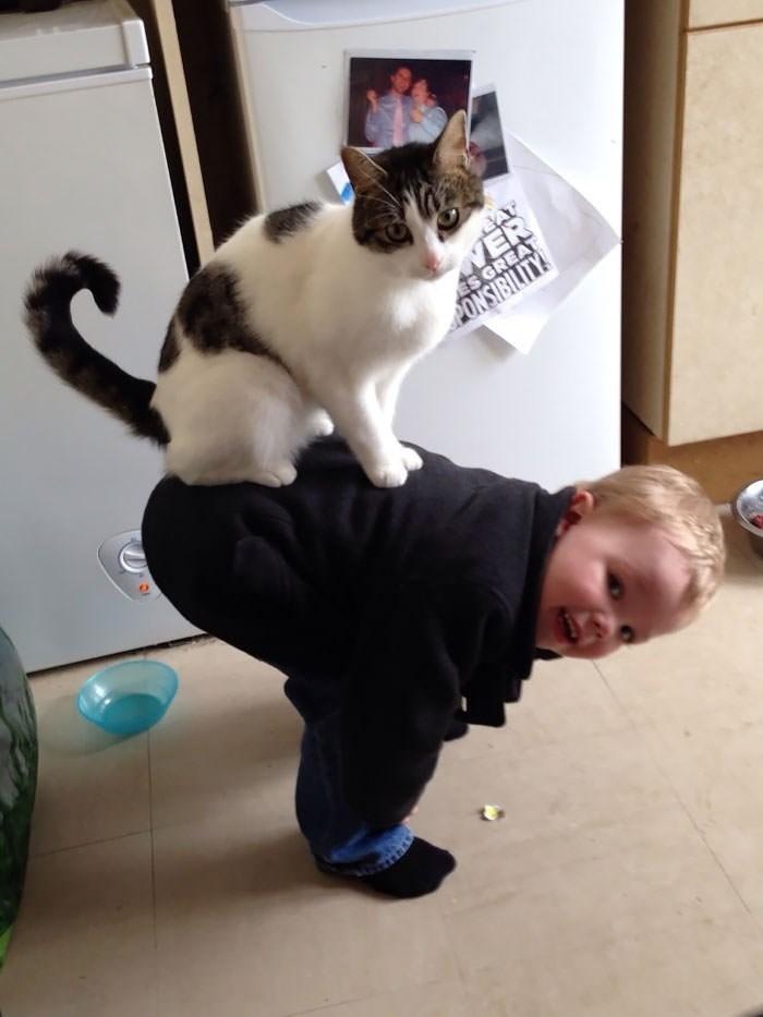 Cat - ES GREA PONSIBILITY