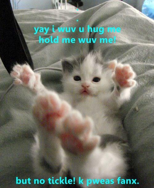 cat meme kitten Memes - 9251721984