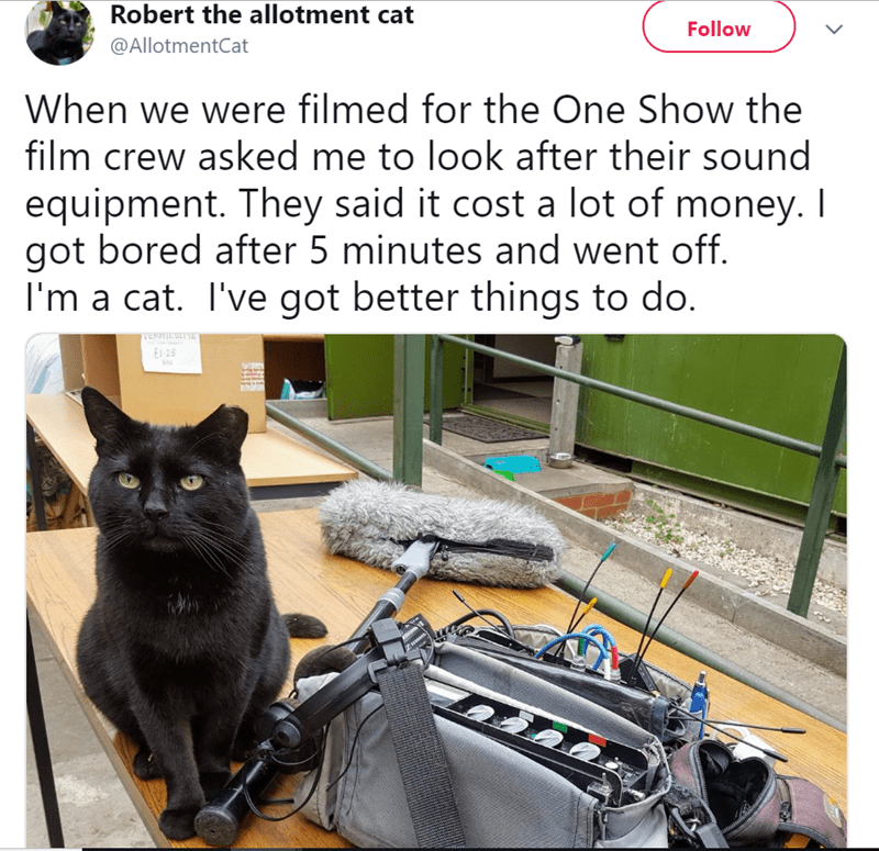 twitter - Cat - Robert the allotment cat Follow @AllotmentCat When we were filmed for the One Show the film crew asked me to look after their sound equipment. They said it cost a lot of money. I got bored after 5 minutes and went off. I'm a cat. I've got better things to do. VENMICULI1E E1-25