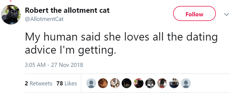 twitter - Text - Robert the allotment cat Follow @AllotmentCat My human said she loves all the dating advice I'm getting. 3:05 AM - 27 Nov 2018 Ca 2 Retweets 78 Likes
