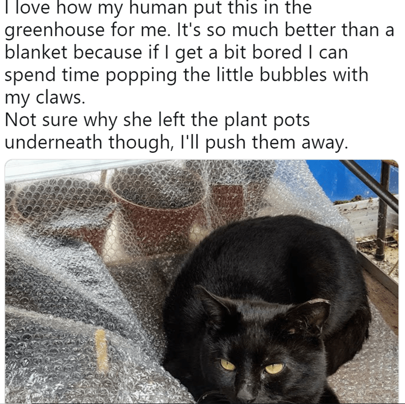 twitter - Cat - love how my human put this in the greenhouse for me. It's so much better than a blanket because if I get a bit bored I can spend time popping the little bubbles with my claws. Not sure why she left the plant pots underneath though, I'll push them away.