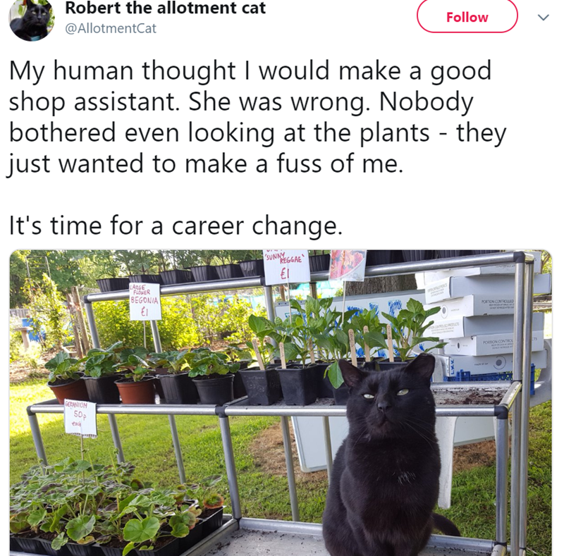 twitter - Plant - Robert the allotment cat Follow @AllotmentCat My human thought I would make a good shop assistant. She was wrong. Nobody bothered even looking at the plants - they just wanted to make a fuss of me. It's time for a career change. SUNNY REGGAE LARGE FLOWER BEGONIA 20ETION COMTOLLED uOROC ETS PORTION CONTRO GEPANIOM 50P eack