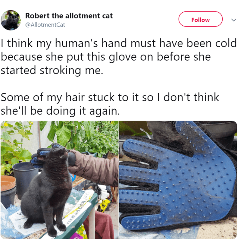 twitter - Glove - Robert the allotment cat @AllotmentCat Follow I think my human's hand must have been cold because she put this glove on before she started stroking me. Some of my hair stuck to it sol don't think she'll be doing it again. REE THAN YOUa