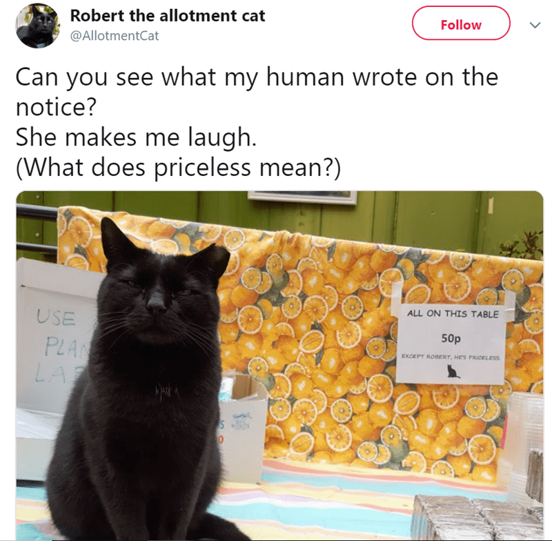 twitter - Cat - Robert the allotment cat Follow @AllotmentCat Can you see what my human wrote on the notice? She makes me laugh. (What does priceless mean?) ALL ON THIS TABLE USE 50p PLAN LA EXCEPT ROBERT, HES PRICELESS