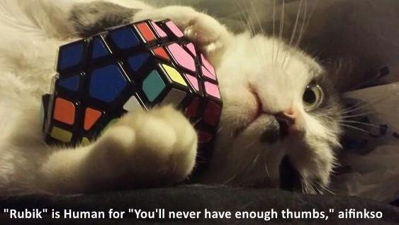 cat meme rubiks cube - 9252057856