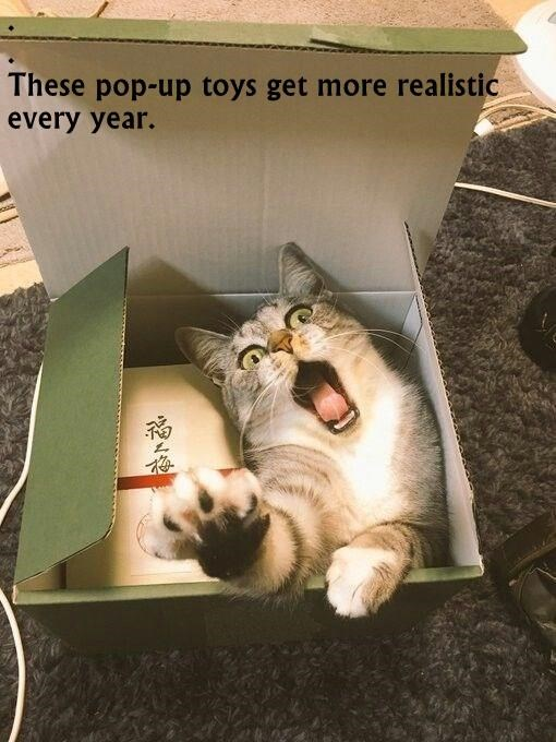 cat meme - Cat - These pop-up toys get more realistic every year.