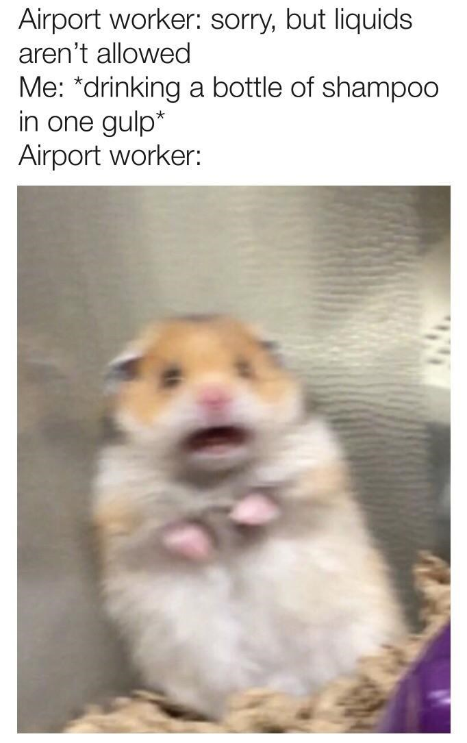"Caption that reads, ""Airport worker: Sorry, but liquids aren't allowed; Me: *Drinking a bottle of shampoo in one gulp;* Airport worker: ..."" above a pic of scared hamster"