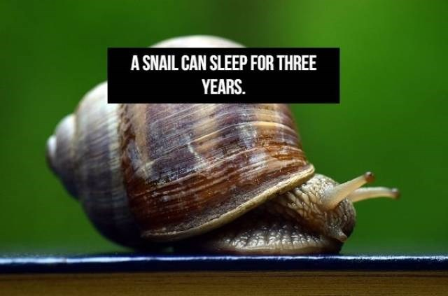 Snails and slugs - A SNAIL CAN SLEEP FOR THREE YEARS