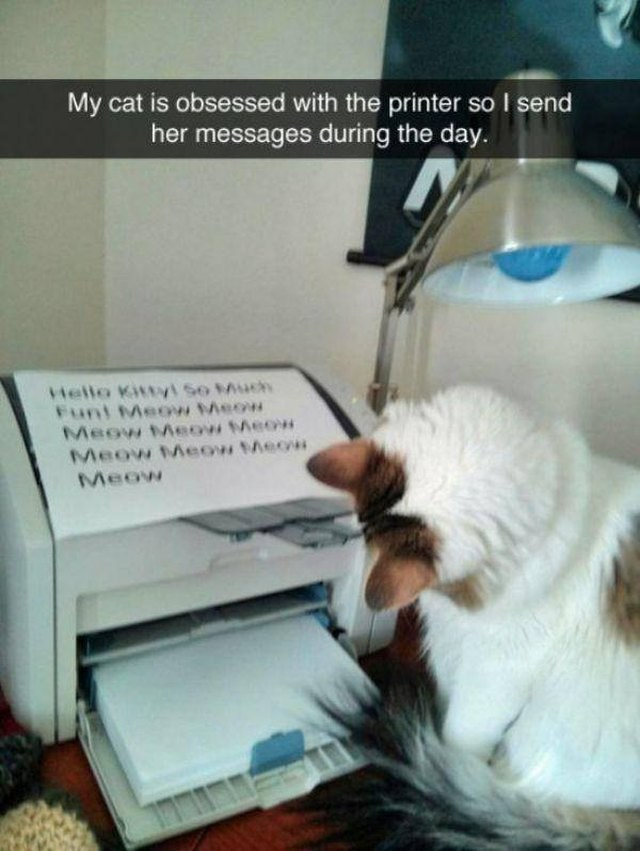 cat looking dumbfounded at the printer that says meow