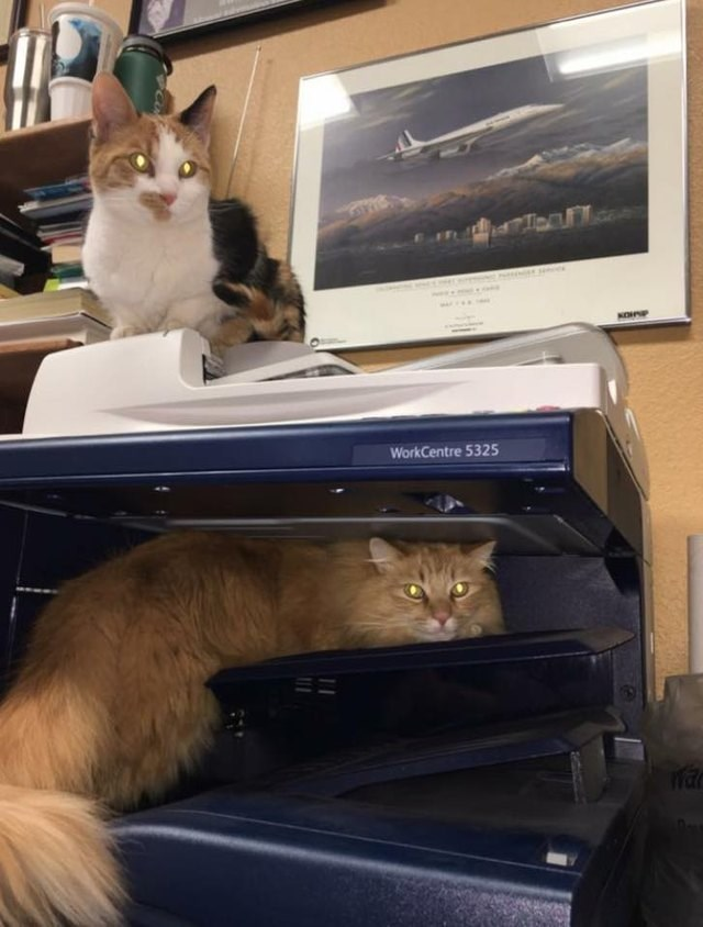 cat sitting inside the printer and another cat sitting on top of the printer