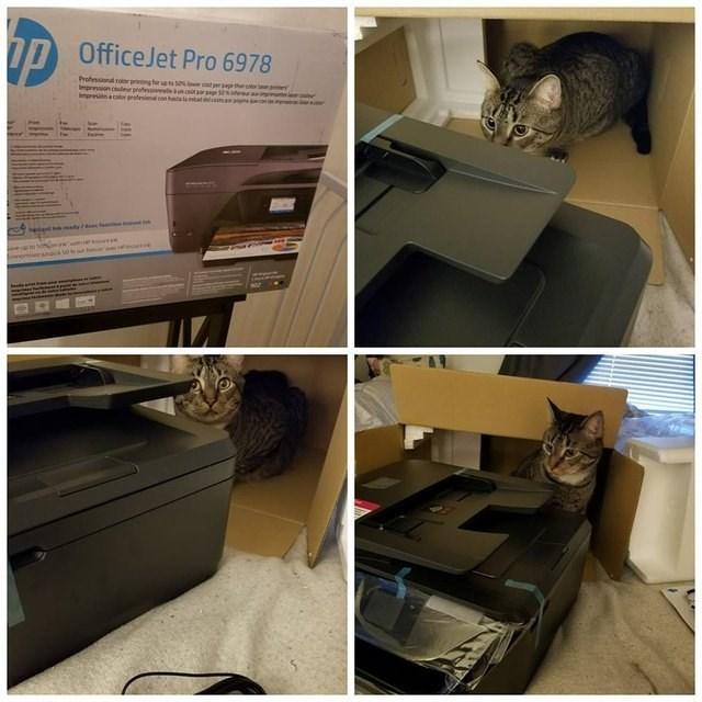 cat sitting inside the printer box