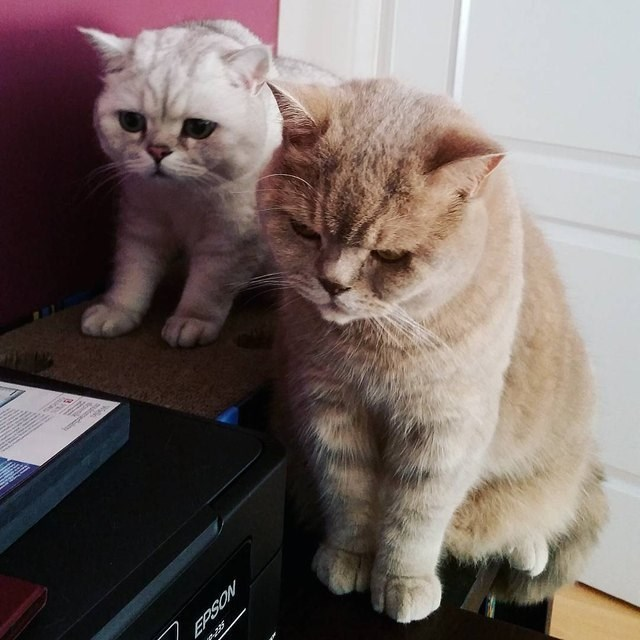 two cats staring at a home printer with contemplative expressions