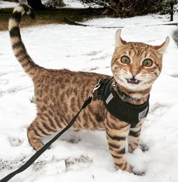 cats in snow - Cat