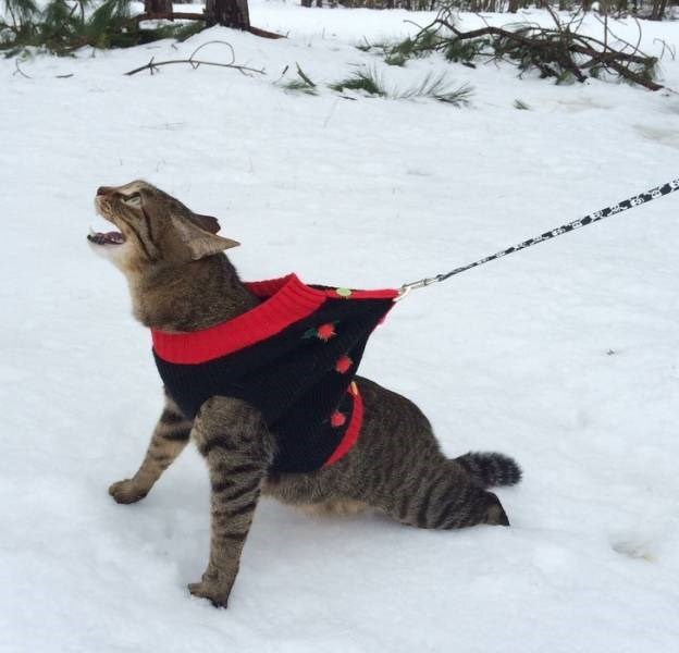 cats in snow - Dog