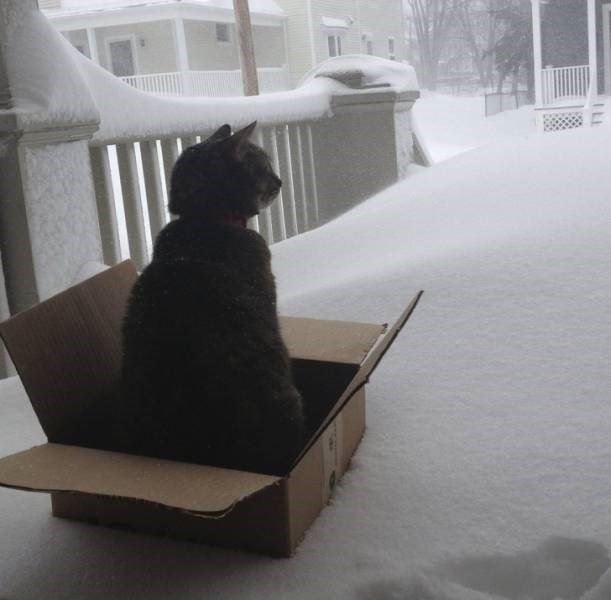 cats in snow - Snow