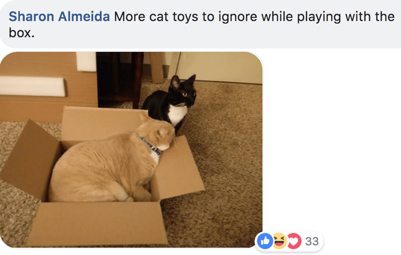 Cat - Sharon Almeida More cat toys to ignore while playing with the box. O33