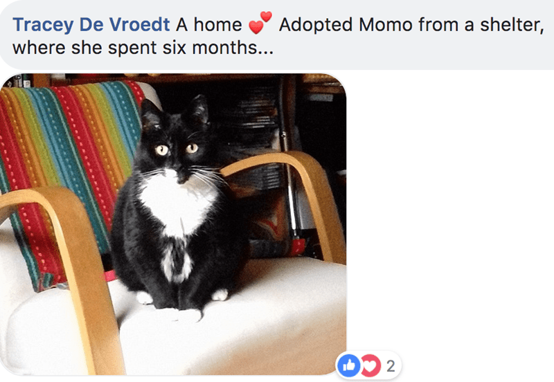 Cat - Tracey De Vroedt A home where she spent six months... Adopted Momo from a shelter, 2