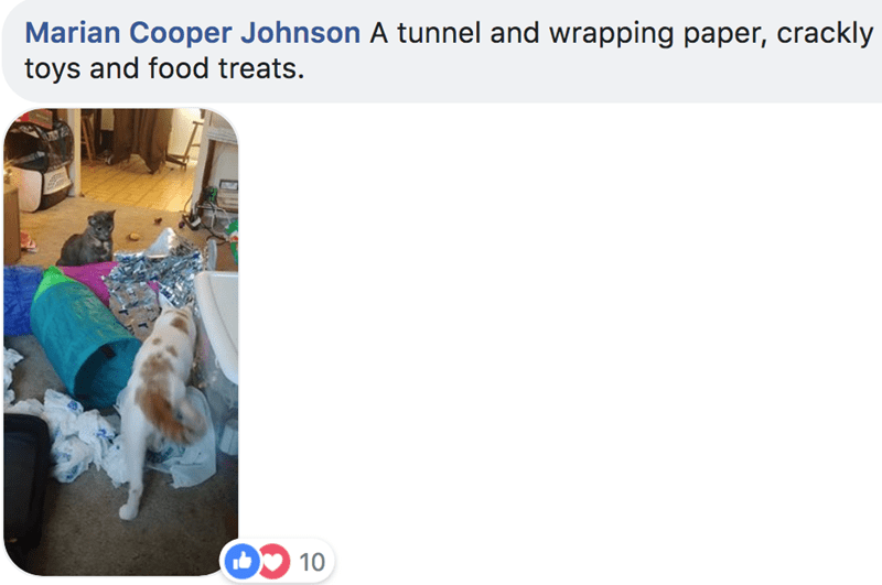 Canidae - Marian Cooper Johnson A tunnel and wrapping paper, crackly toys and food treats. 10