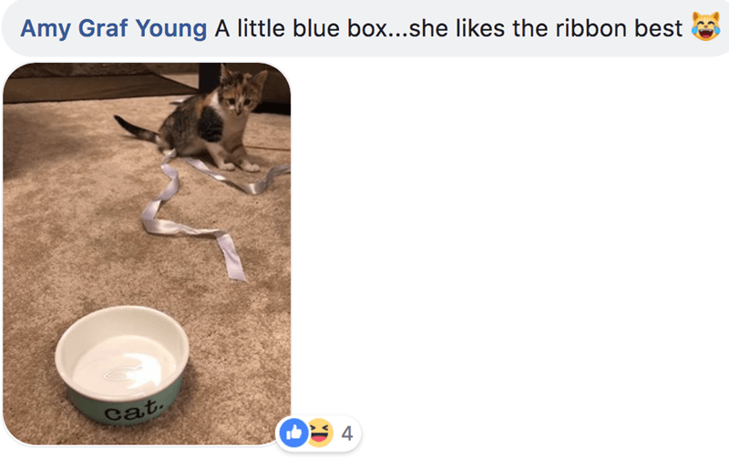 Water - Amy Graf Young A little blue box...she likes the ribbon best cat 4