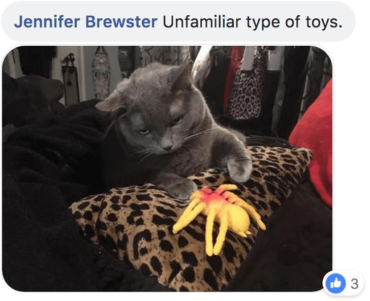 Cat - Jennifer Brewster Unfamiliar type of toys. 3