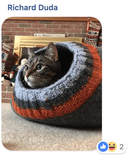 Cat - Richard Duda MRRY 2