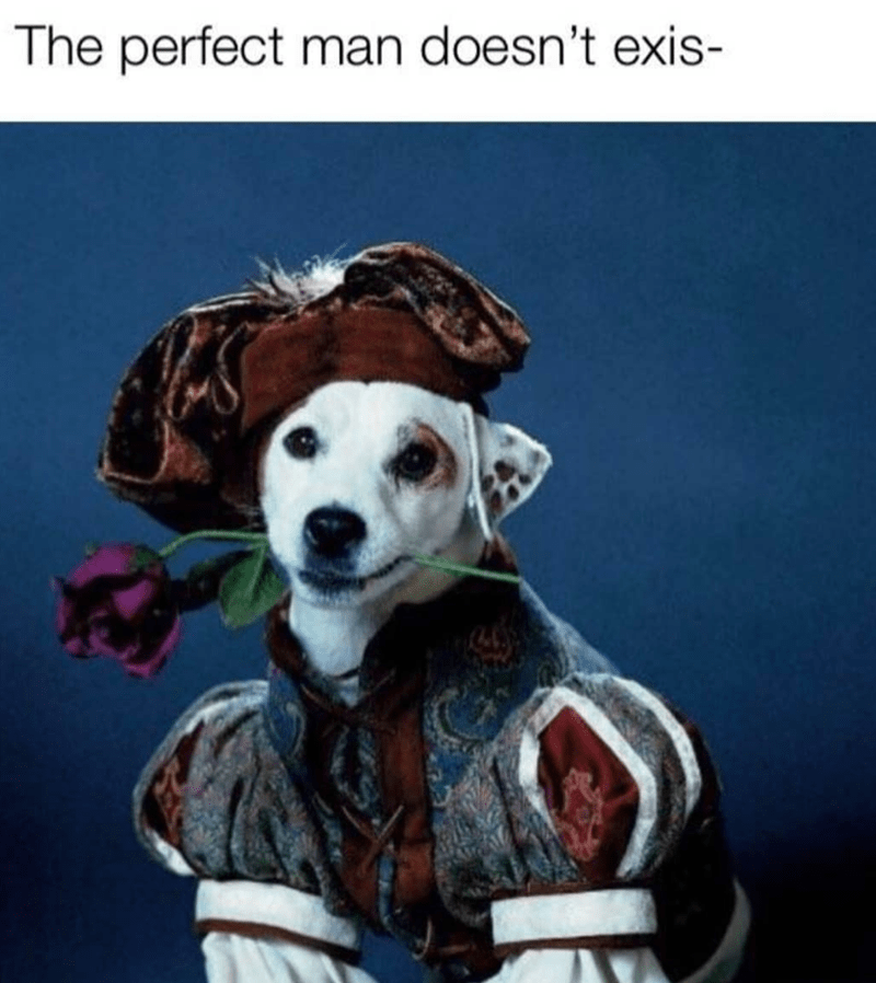 dog meme - Dog - The perfect man doesn't exis-