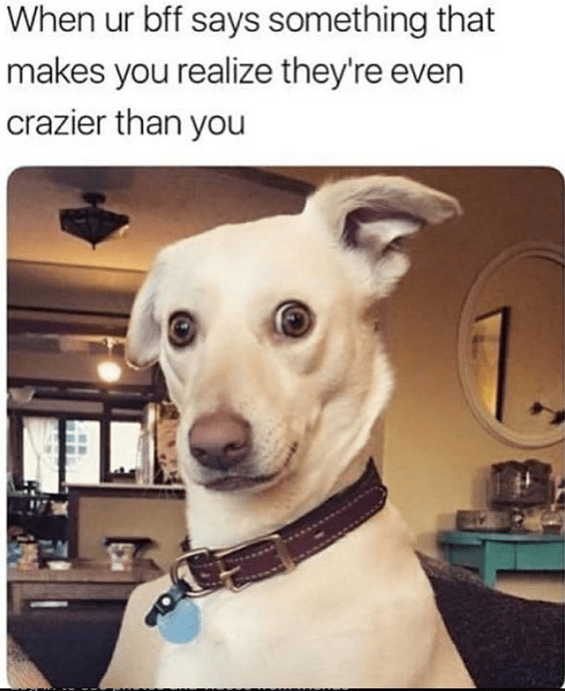 dog meme - Dog - When ur bff says something that makes you realize they're even crazier than you