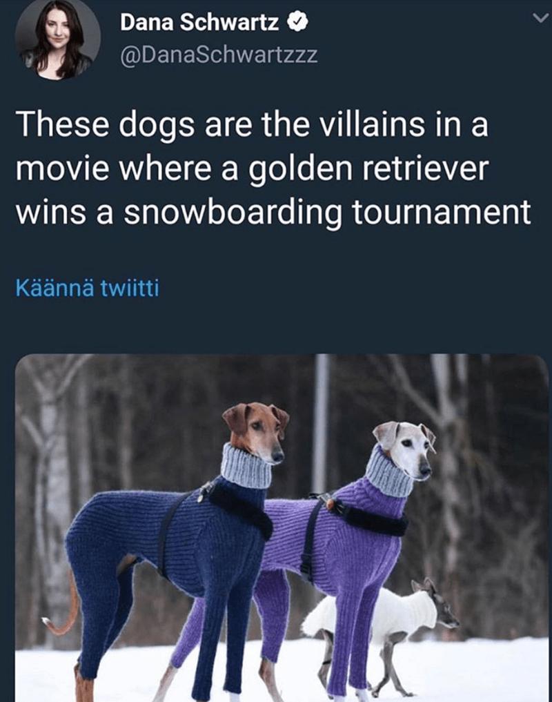 dog meme - Vertebrate - Dana Schwartz @DanaSchwartzzz These dogs are the villains in a movie where a golden retriever wins a snowboarding tournament Käännä twiitti