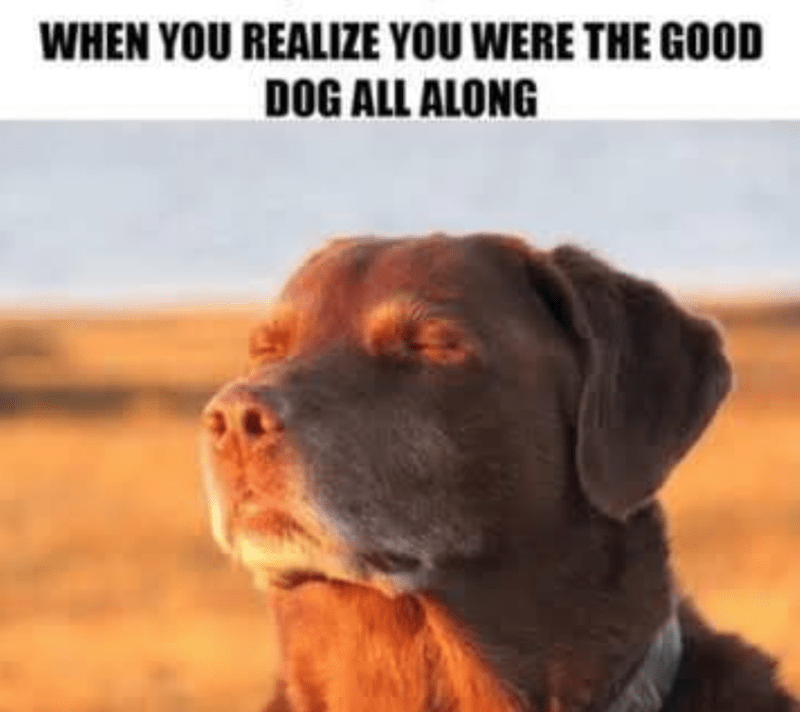 dog meme - Dog - WHEN YOU REALIZE YOU WERE THE GOOD DOG ALL ALONG