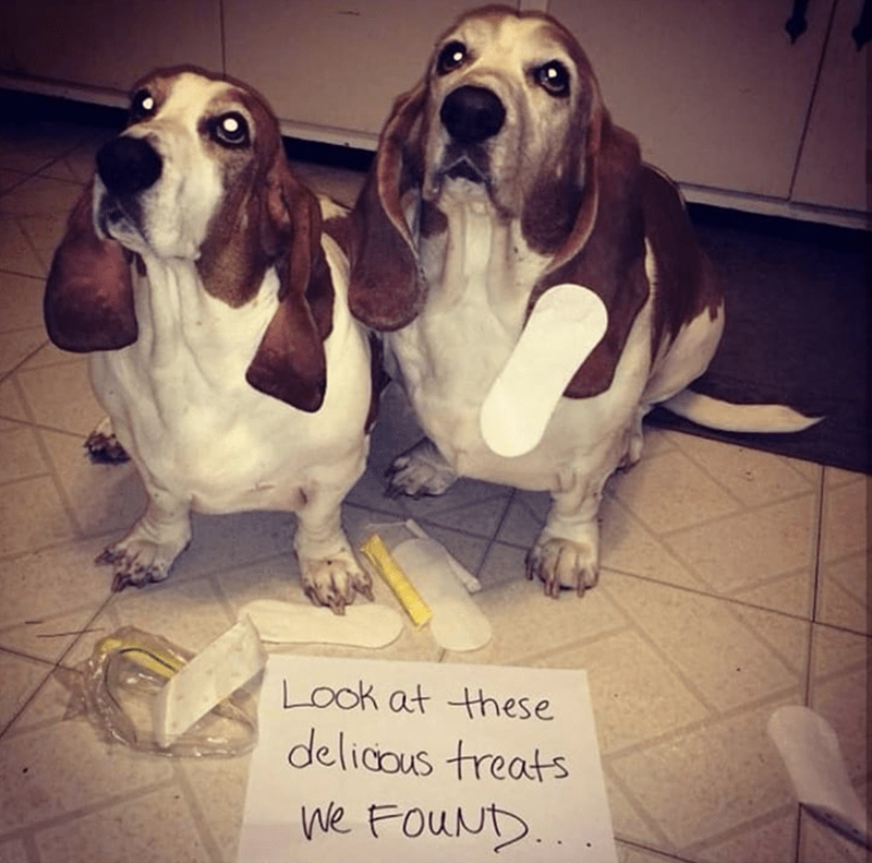 dog meme - Dog - Look at these delicous treats ne FouNt