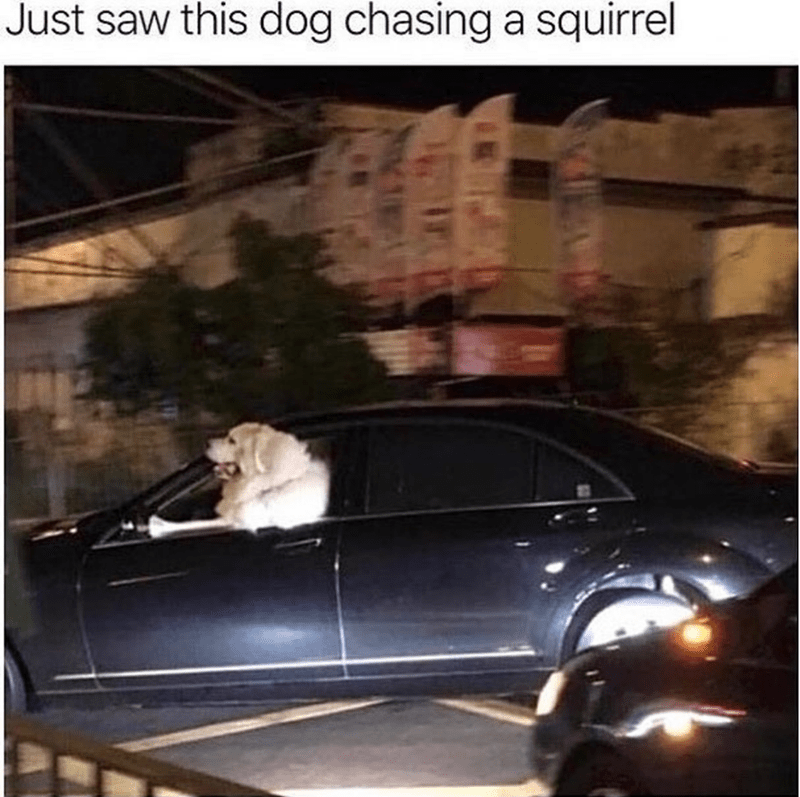 dog meme - Vehicle door - Just saw this dog chasing a squirrel