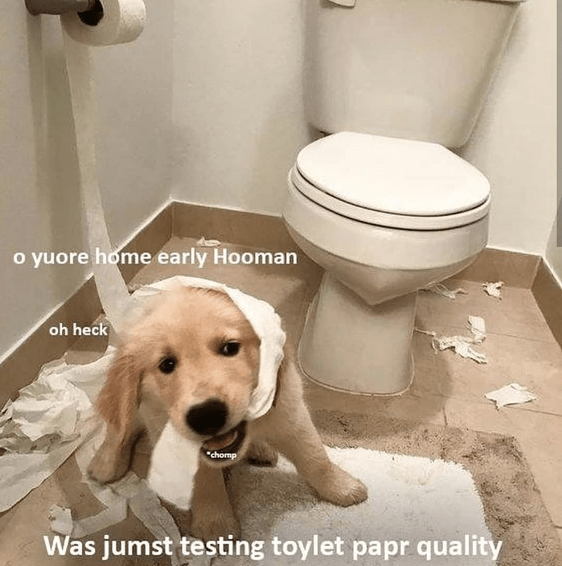 """dog meme - Toilet - o yuore home early Hooman oh heck """"chomp Was jumst testing toylet papr quality"""