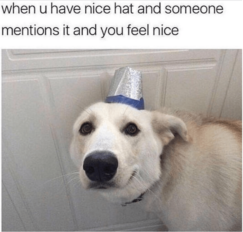 dog meme - Dog - when u have nice hat and someone mentions it and you feel nice