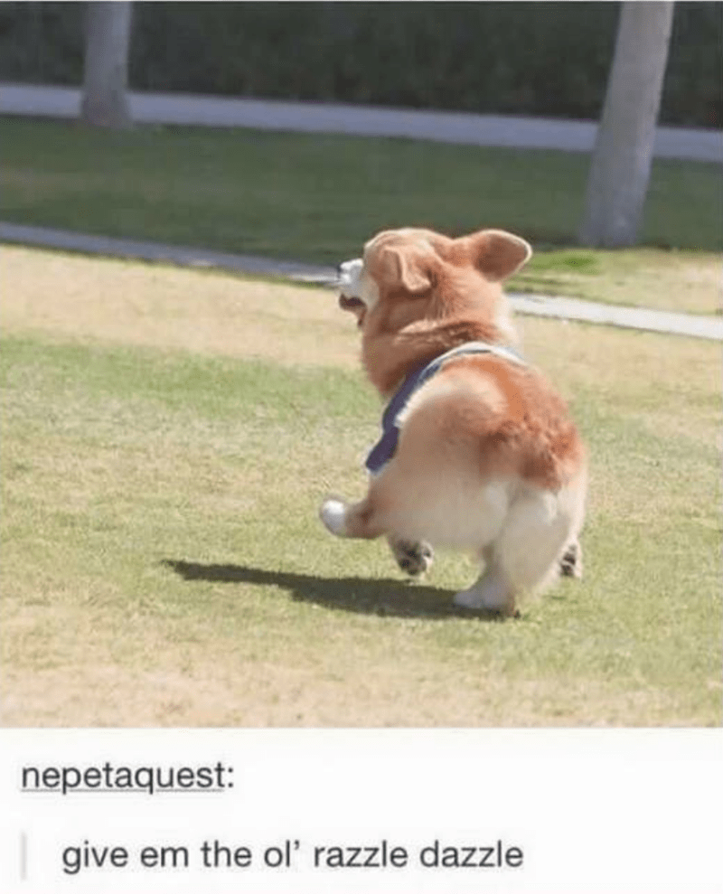 dog meme - Dog - nepetaquest: give em the ol' razzle dazzle
