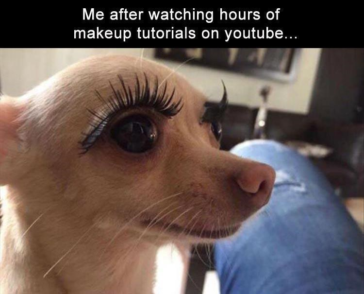 dog meme - Nose - Me after watching hours of makeup tutorials on youtube...