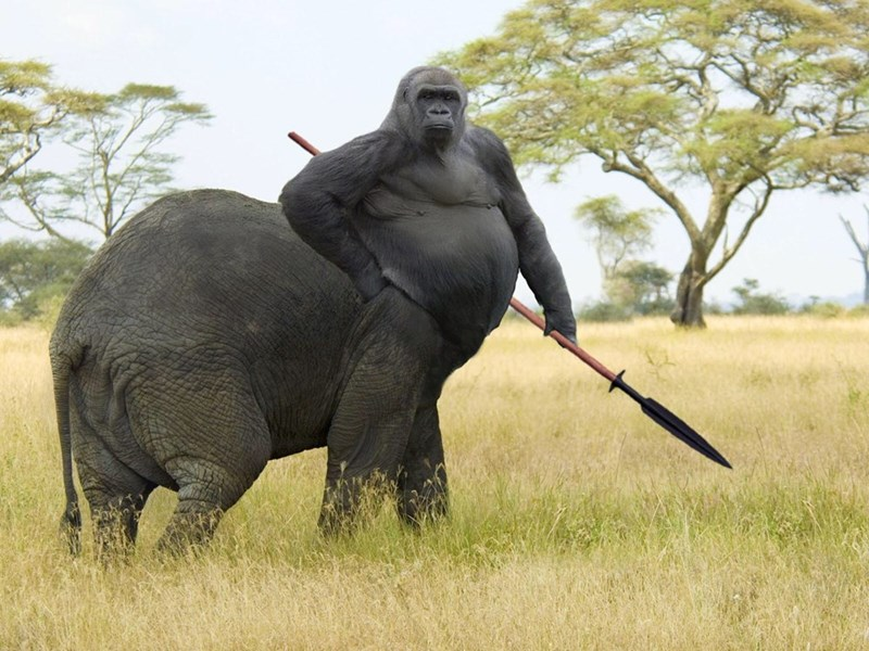 Photoshopped pic of a gorilla torso on top of an elephant's body