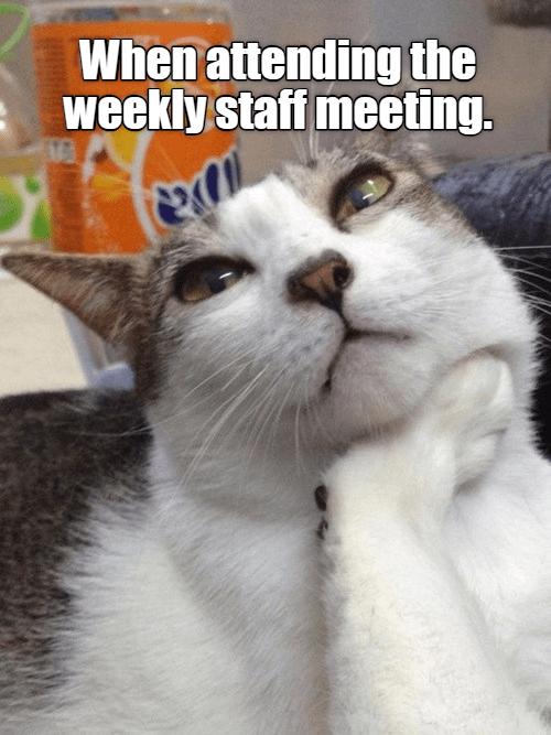funny cat memes work memes mondays - 9252673536