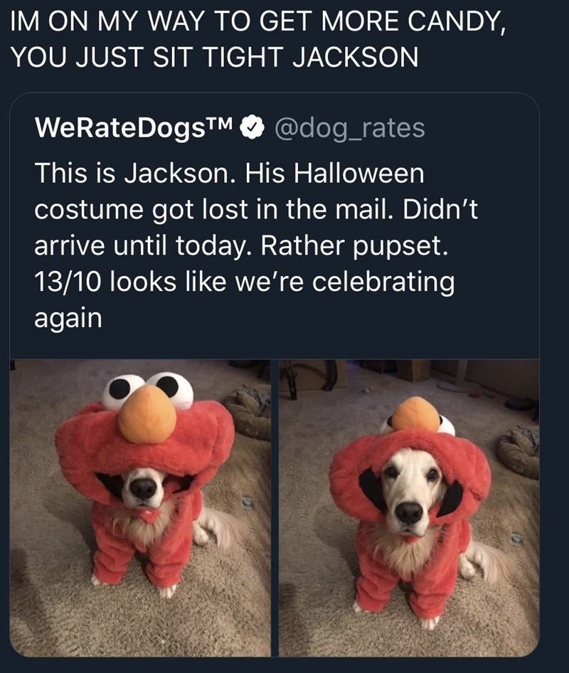 funny tweet - Text - IM ON MY WAY TO GET MORE CANDY YOU JUST SIT TIGHT JACKSON WeRateDogsTM @dog_rates This is Jackson. His Halloween costume got lost in the mail. Didn't arrive until today. Rather pupset. 13/10 looks like we're celebrating again